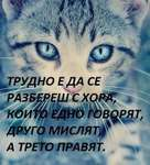 аз-обичам-котки