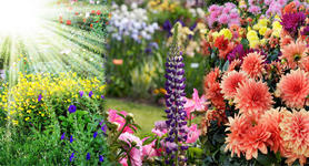 моята-градина