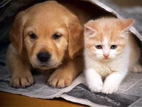 котки-и-кучета