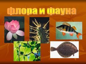 флора-и-фауна