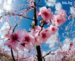 Пролетни картички
