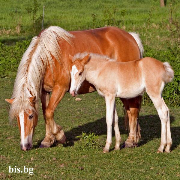 Красиви снимки на животни