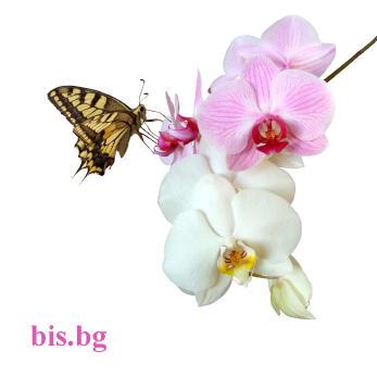 Картички с цветя