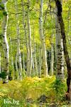 Картини от природата
