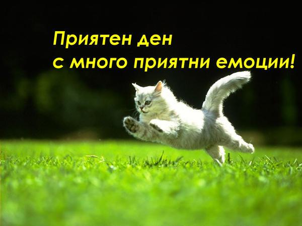 ДОБЪР ДЕН