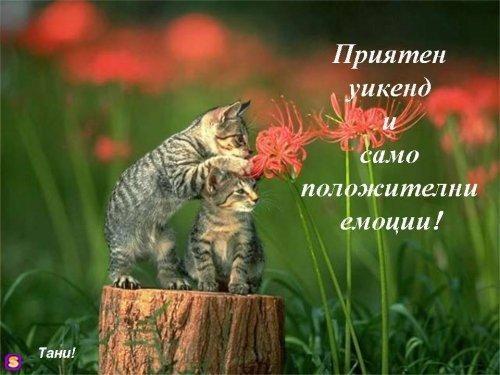 Картинки за добро утро, слънчев ден и приятна вечер - Page 2 1107438