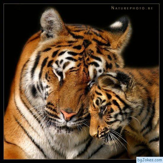 Моите любими животни