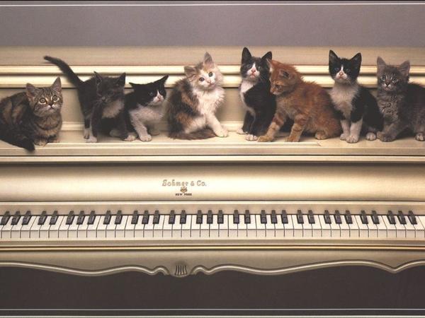 Домашни котки